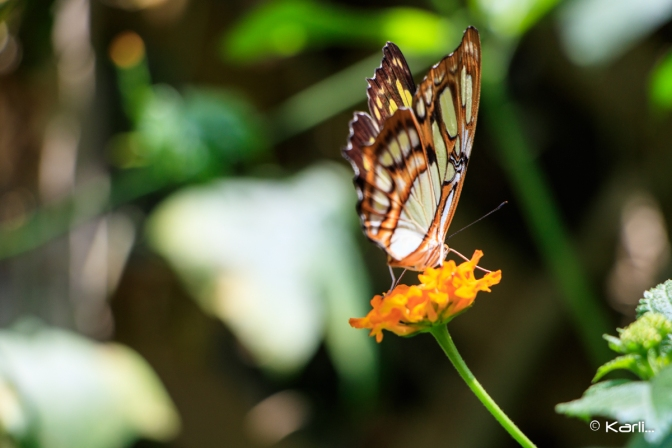 Photo: Butterfly Kisses (Gallery)